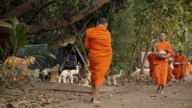 Buddhist calming monks and alms walking in early morning — Stock Video