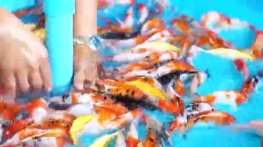 Cleaning carp fish selling pit. — Stock Video