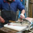 Chef prepares porcupine fish sashimi — Stock Video #68772331