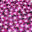 Purple orchid floating in water — Stock Photo #70384407