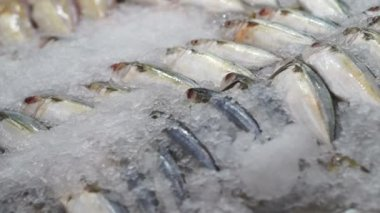 Variety Fresh Fish at the market on ice — Stock Video