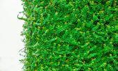 白い背景で隔離の緑の葉 — ストック写真