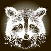 Hand drawn raccoon — Stockvektor