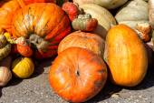 Orange pumpkins in different shapes on the pumpkin patch. — Stock Photo