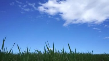 Green field and cloudy sky — Stock Video
