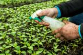 Close up in the hands of a man while spraying the small plants i — Stock Photo