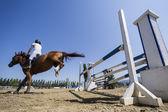 Cavalier inconnu sur un cheval pendant les matches de compétition d'équitation rond — Photo