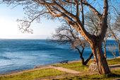 Strom a osamělé lavice na pobřeží — Stock fotografie