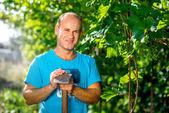Farmer in the grape plantation — Stock Photo