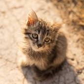 Little cat with green eyes — Stok fotoğraf