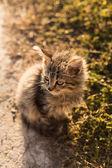 Little gray cat near the grass — Stok fotoğraf