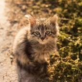 Little grey cat on the ground — Stok fotoğraf