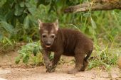 Hyena South Africa — Stockfoto