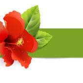 Hibiscus çiçek arka plan — Stok Vektör