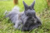 Fluffy gray rabbit on the grass — Stock Photo