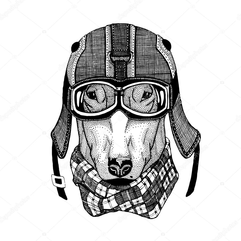 T shirt design download - Vintage Vector Images Of Dogs For T Shirt Design For Motorcycle Bike Motorbike