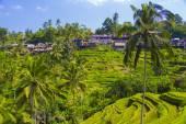Tegalalang rice terrace. Bali — Stock Photo