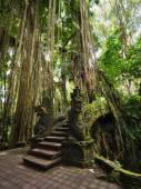 Bridge at Monkey Forest Sanctuary in Ubud, Bali, Indonesia — Stock Photo