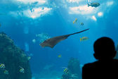 Big ocean ray — Stockfoto
