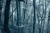 Infrared deep forest — Stock Photo