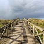 Sea coast dune with wooden walkway — Stock Photo #66151241