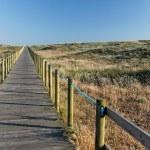 Sea coast dune with wooden walkway — Stock Photo #76294169