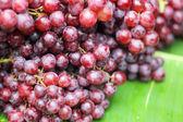 Close up fresh fruit grape in nature  — Stock Photo