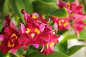 Red-orange orchid flowers in the nature — Stockfoto