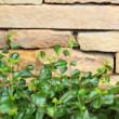 Brick wall background texture - vintage with tree — Stock Photo #54079931