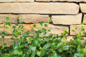 Brick wall background texture - vintage with tree — Stock fotografie