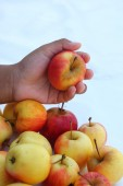 Red apples fresh in hand. — Stock Photo