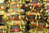 Čerstvý krab na trhu — Stock fotografie