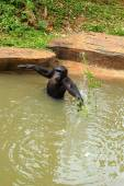 Monkey sitting on the river. — Foto de Stock