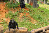 Monkey sitting at the nature — Stock Photo