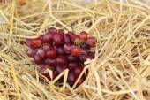 Bunch of grapes on straw — Stock Photo