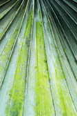 Palms leaves background in nature — Stockfoto