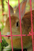 Rabbit in a cage. — Stock Photo