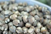 Close up of of fresh cockle — Stock Photo