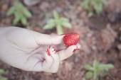 Fresh strawberry fruit in hand — Stock Photo