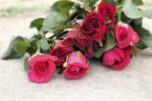 Red rose at beautiful — Stock Photo
