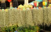 Spanish moss in the garden — Stock Photo