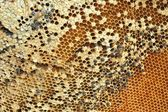 Honeycomb on the branch at market — Fotografia Stock