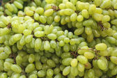 Green grapes at the market — Stock Photo