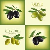 Rameau d'olive oil.vector décoratifs. pour les étiquettes, pack. — Vecteur