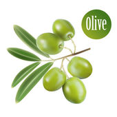 Vector green olives isolated — Stock Vector