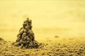 Sand tree sepia tonned — Foto de Stock