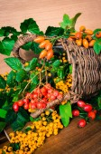 Colorful autumn fruits and plants — Stock Photo
