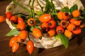Orange briar — Stock Photo