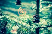 Decoration in tree — Stock Photo