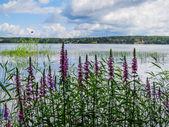 The Mon Repos Park, Vyborg — Stock Photo